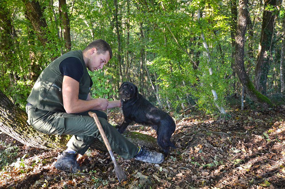 Truffle hunting in Croatia