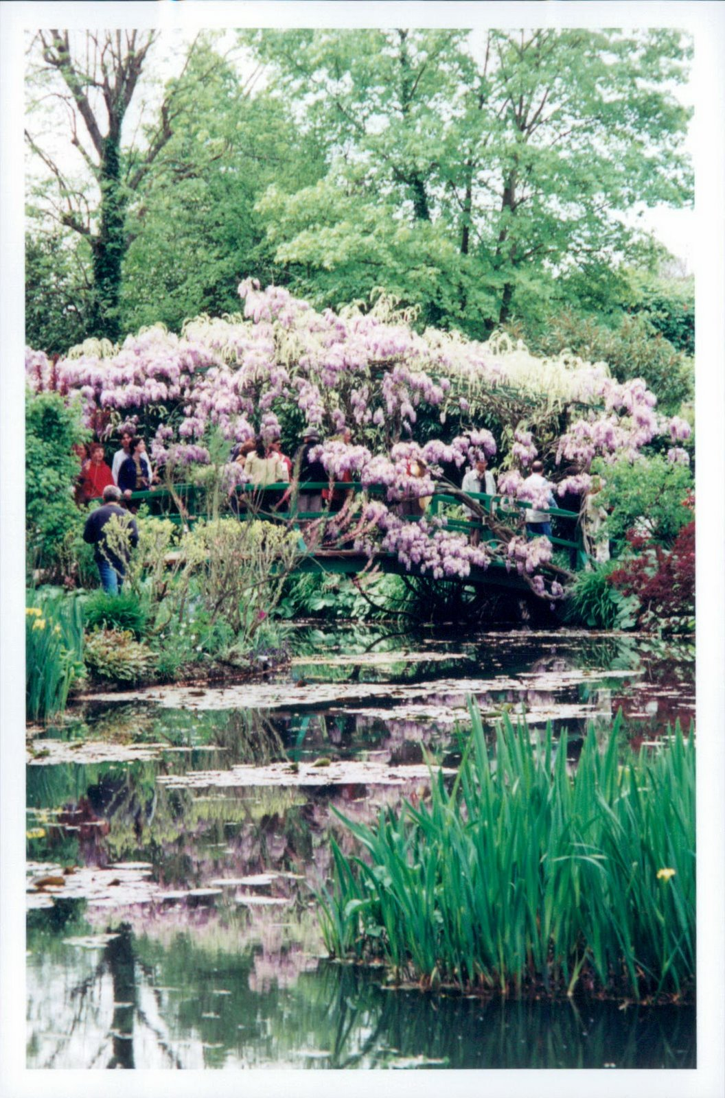 Cherry blossom trees and water lily pond at Monet's garden, Giverny France