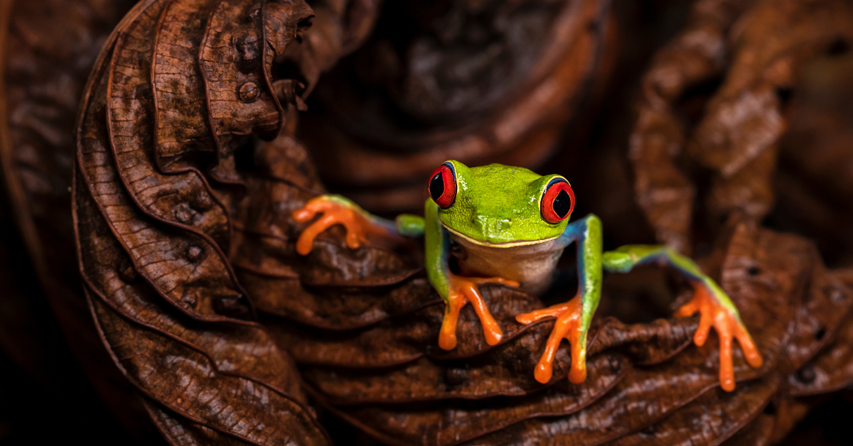 View of frog on a nighttime hike in Costa Rica