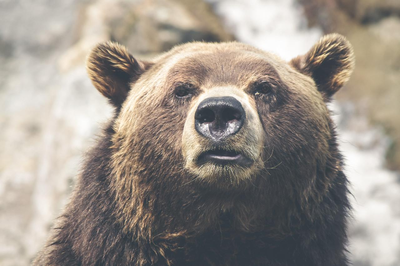 Looking into the face of a bear in Alaska!