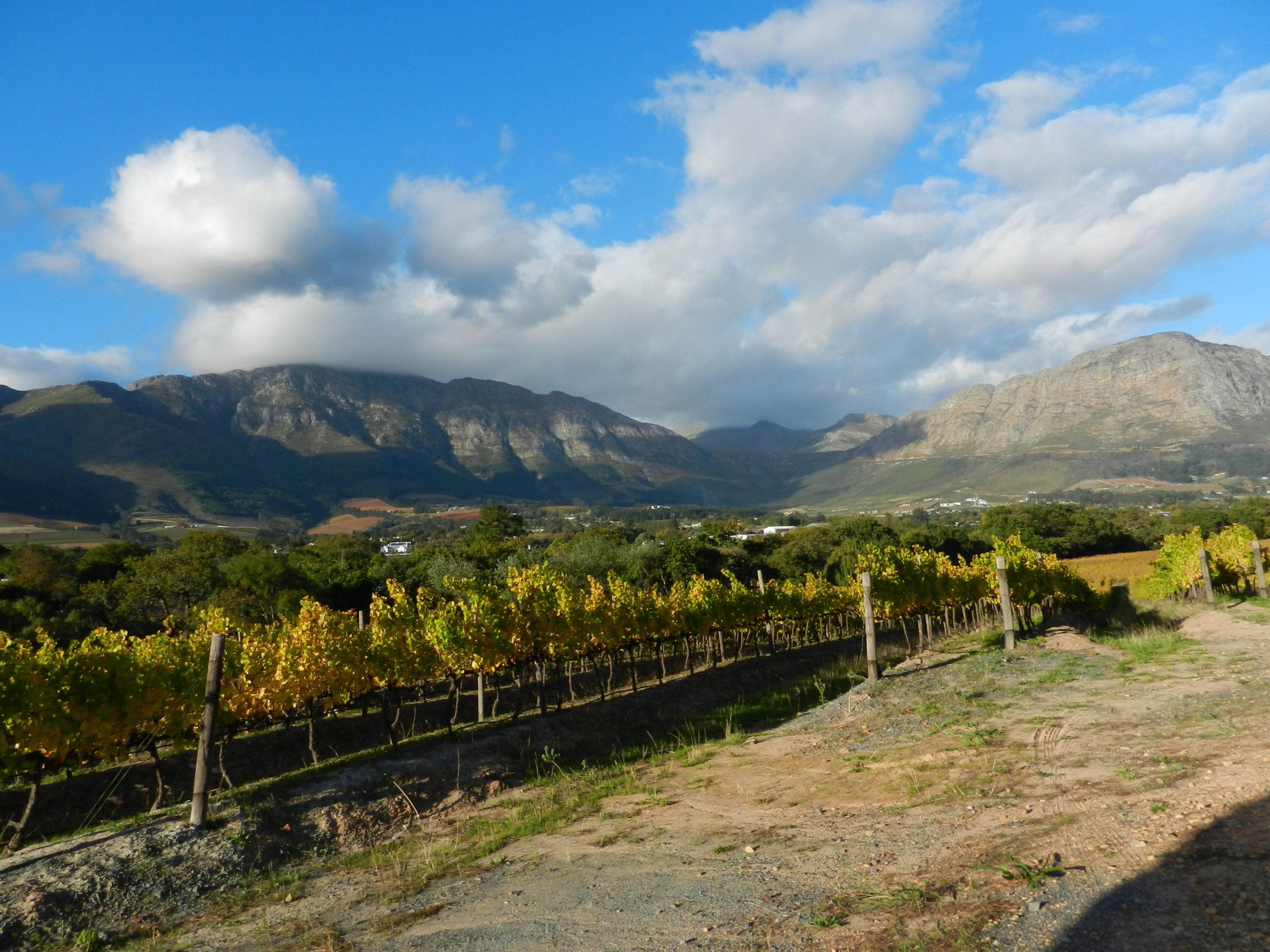 Beautiful view of the vineyards in Franschhoek valley