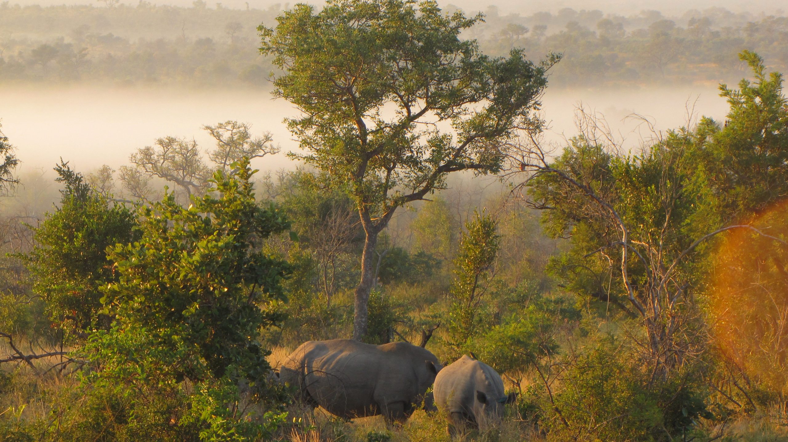Morning view in Kruger National Park. Image Cindy Dykman