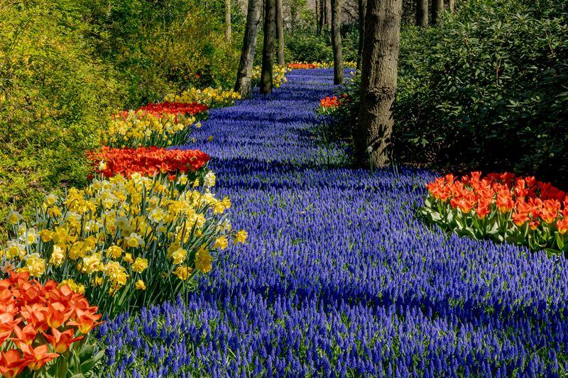 River of flowers at Keukenhof, Europe's Garden