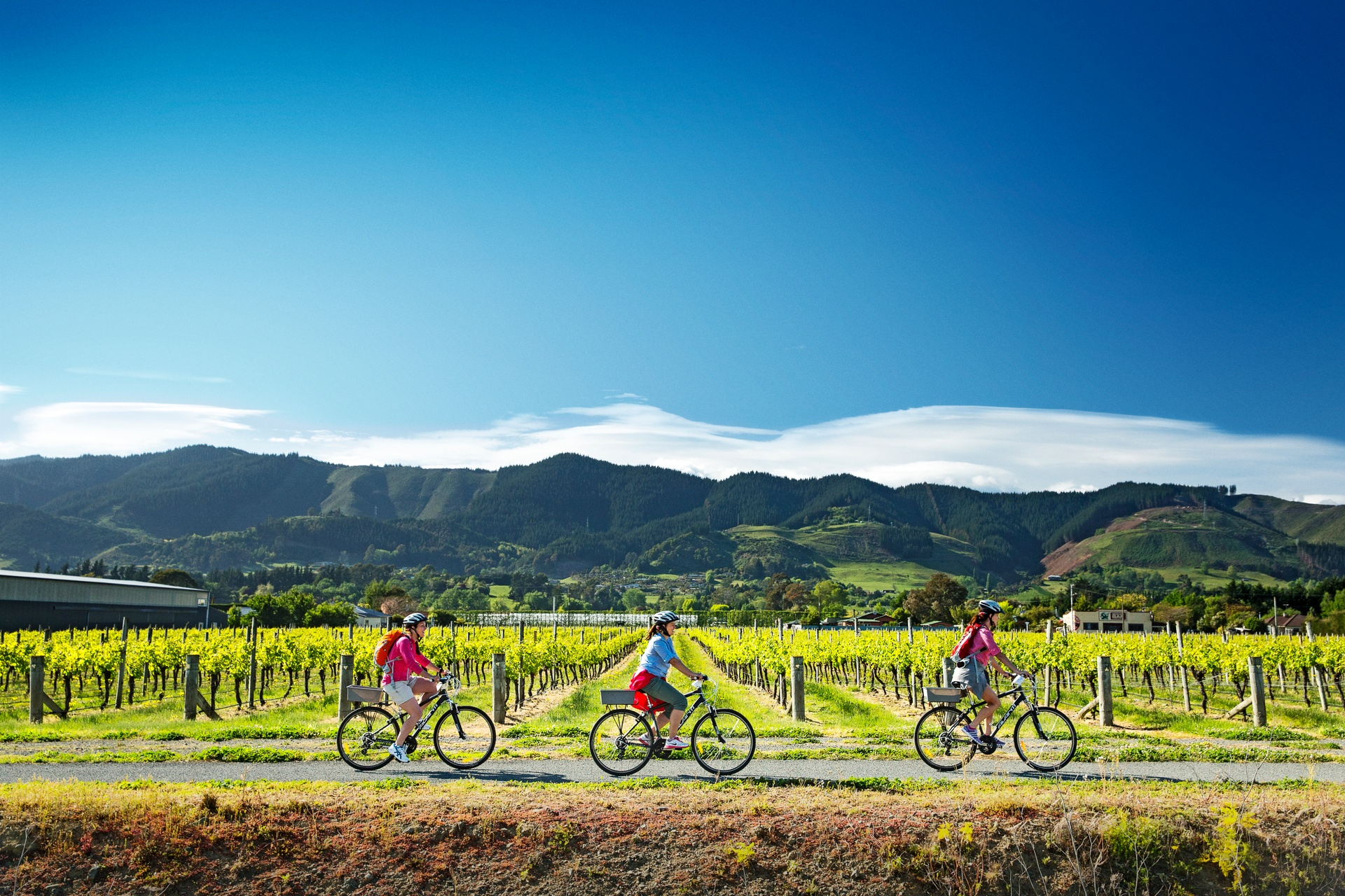 Cycling through the vineyards in New Zealand