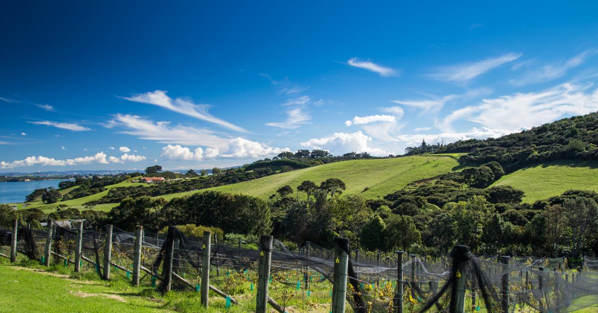 Vineyards on Waiheke Island, New Zealand